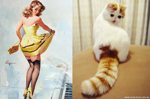 cats that look like pin ups 2